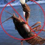 Літньо-осіння заборона на ловлю річкових раків